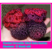 Marvelous 40 Ideas Crochet Newborn Booties