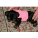 Incredible 47 Images Crochet Small Dog Sweater Pattern