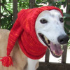 Innovative 49 Images Knitted Dog Hats