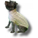 Amazing 49 Photos Free Knitting Pattern for Dog Sweater