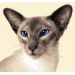 Perfect 42 Pics Cat Cross Stitch Kits