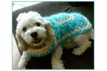 New 48 Images Easy Crochet Dog Sweater Pattern Free