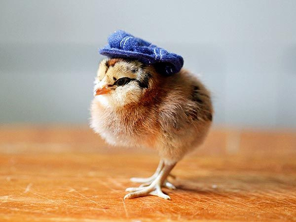 Awesome 42 Best Animals In Hats Images On Pinterest Baby Animal Hats Of Attractive 49 Images Baby Animal Hats