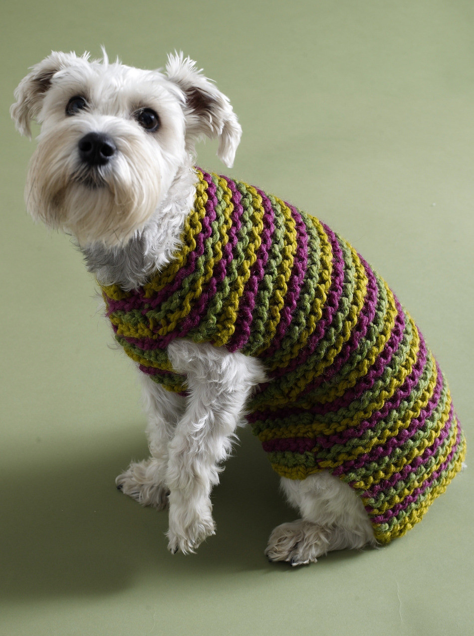 Awesome City Stripes Dog Sweater In Lion Brand Wool Ease Thick Lion Yarn Patterns Of Delightful 41 Images Lion Yarn Patterns