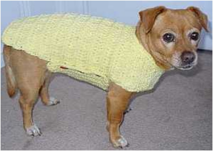 Awesome Crochet Dog Sweaters Free Crochet Patterns & Video Tutorials Free Crochet Pattern for Small Dog Sweater Of Adorable 48 Images Free Crochet Pattern for Small Dog Sweater