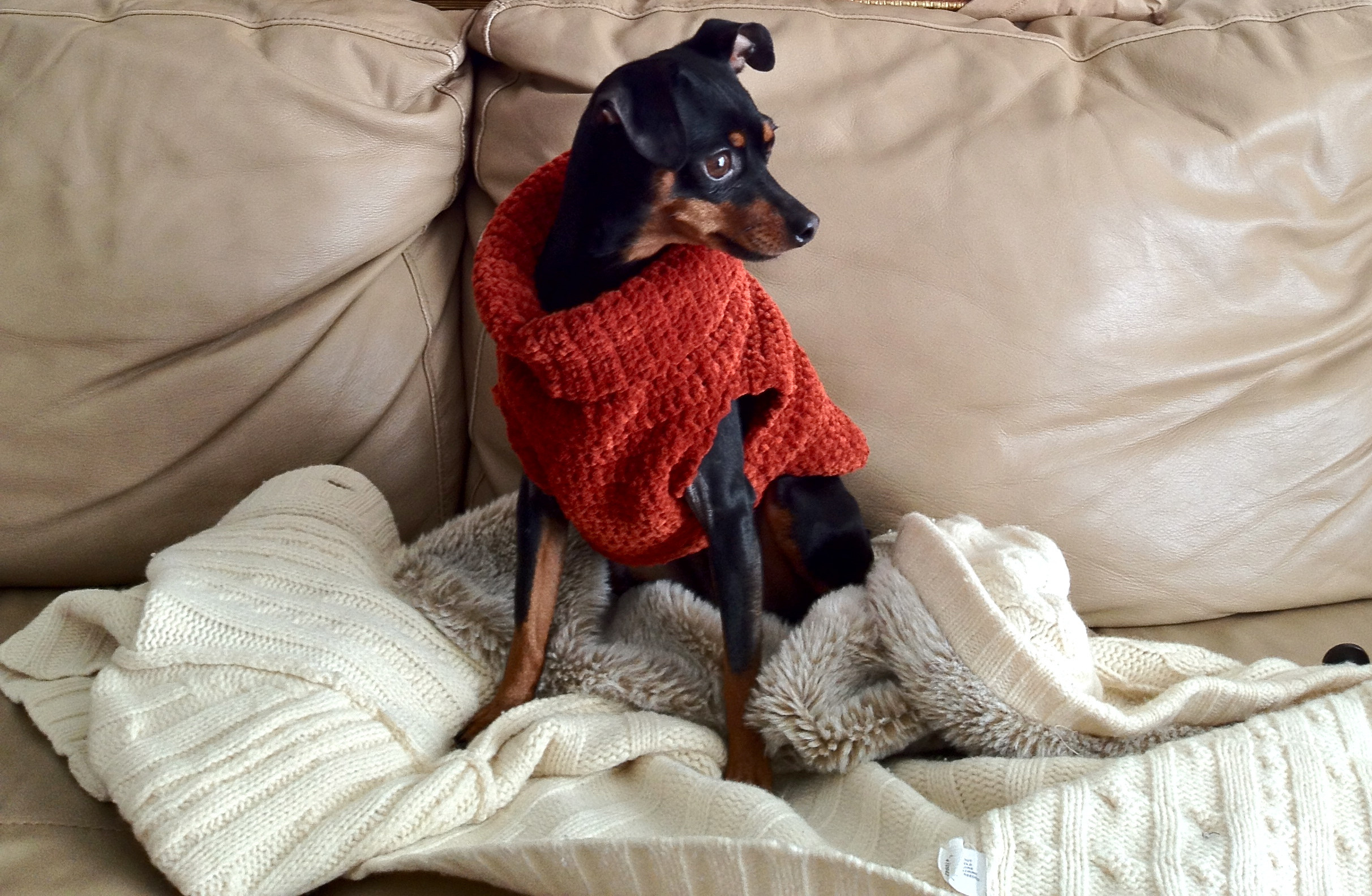 Awesome Crocheted Dog Sweater Free Crochet Pattern for Small Dog Sweater Of Adorable 48 Images Free Crochet Pattern for Small Dog Sweater