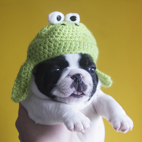 Awesome Dog In Hand with A Knit Frog Hat Knitted Dog Hats Of Innovative 49 Images Knitted Dog Hats