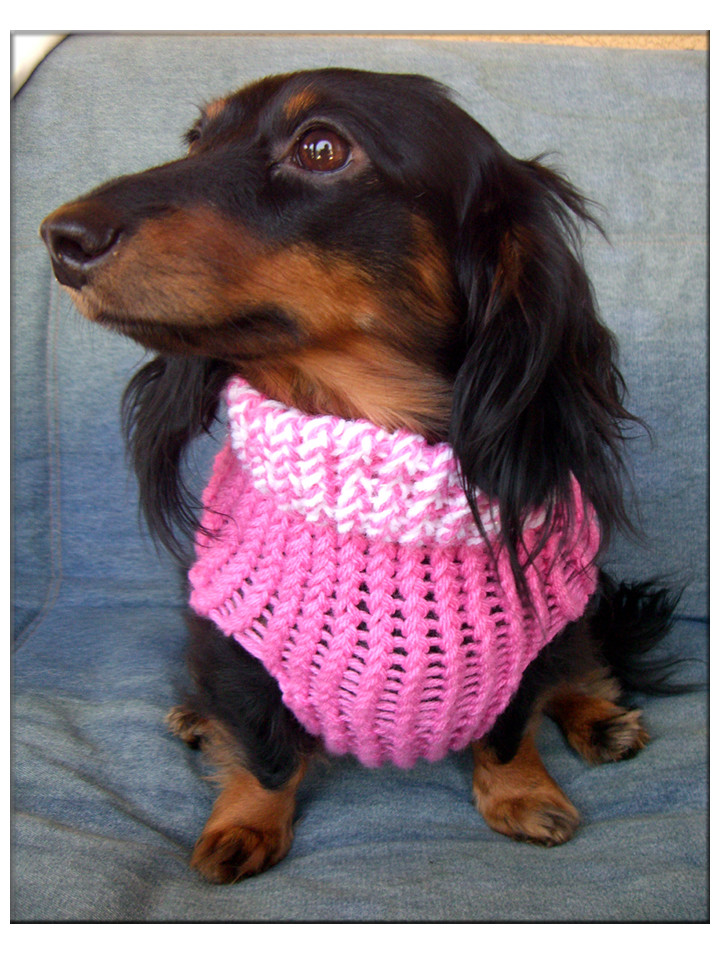 Awesome Dog Sweater 2 Loomahat Easy Knit Dog Sweater Of Charming 49 Ideas Easy Knit Dog Sweater