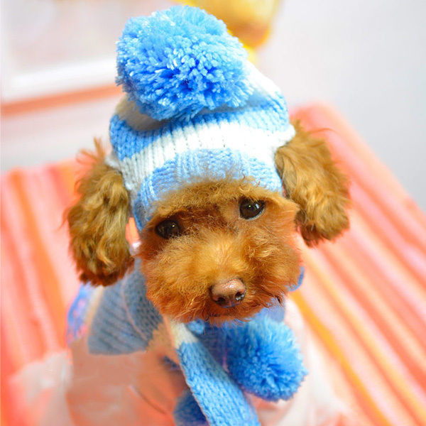 Awesome Pet Dog Cat Clothes Apparel Knitted Hat Scarf Set Warm Knitted Dog Hats Of Innovative 49 Images Knitted Dog Hats