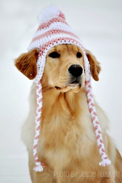 Beautiful 17 Best Images About Love is Golden On Pinterest Crochet Dog Hat Of Marvelous 45 Pictures Crochet Dog Hat