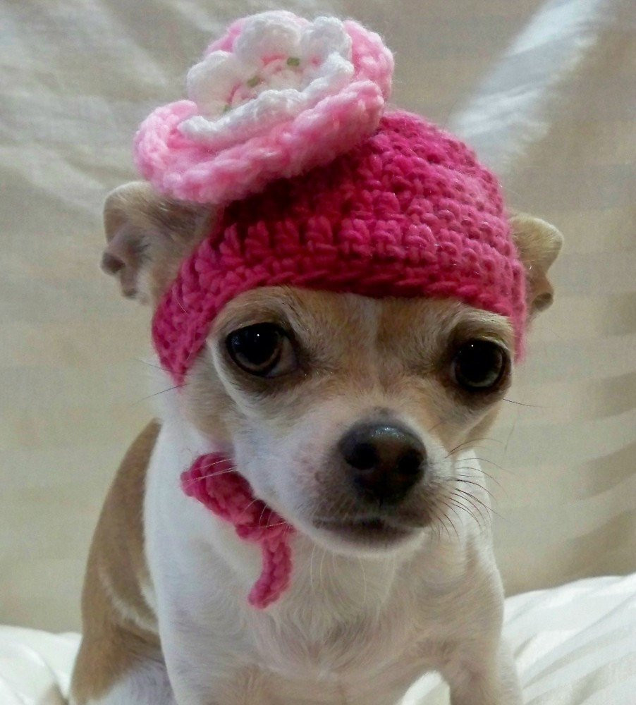 Beautiful Dog Hat Crocheted Wool Pink with White and Pink Flower In Crochet Dog Hat Of Marvelous 45 Pictures Crochet Dog Hat