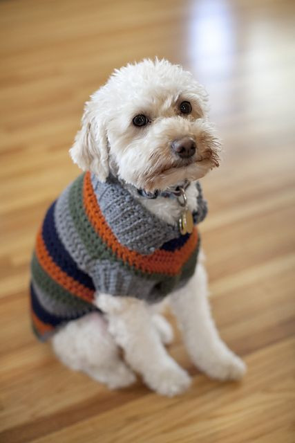 Dogs In Sweaters Eating