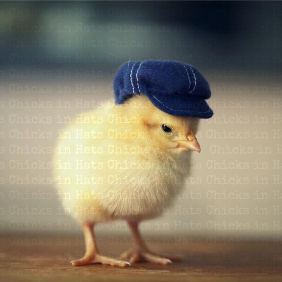 Beautiful Items Similar to Print 8×10 Chick Wearing A Denim Baby Chicken Hat Of Elegant Grapher Takes Inspiration From Daughter 7 to Dress Baby Chicken Hat