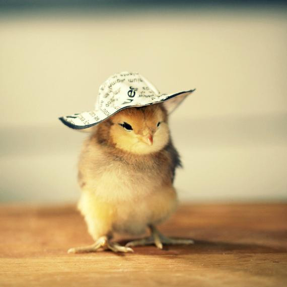 Beautiful Julie Persons Chicks In Hats Baby Chicken Hat Of Elegant Grapher Takes Inspiration From Daughter 7 to Dress Baby Chicken Hat