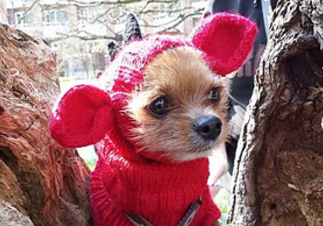 Beautiful Knitted Dog Hats with Ears Easy Free Patterns Knitted Dog Hats Of Innovative 49 Images Knitted Dog Hats