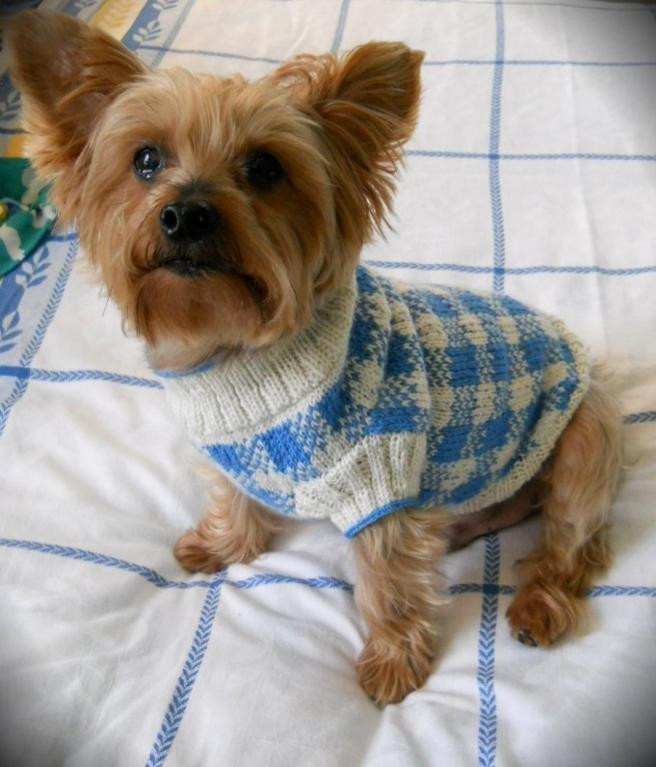 knitted sweaters for dogs