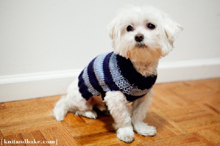 Beautiful top 10 Free Knitting Patterns for Cats and Dogs top Inspired Easy Dog Sweater Knitting Pattern Of Innovative 50 Models Easy Dog Sweater Knitting Pattern