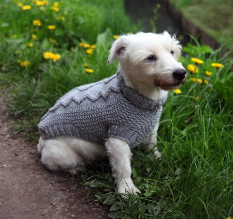 Beautiful What You Need to Know About Knitted Dog Coats Free Knitting Pattern for Dog Sweater Of Amazing 49 Photos Free Knitting Pattern for Dog Sweater