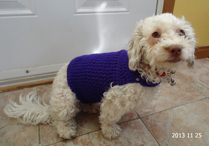 Best Of Crochetnmore Newsletter Free Crochet Patterns Gift Card Free Crochet Pattern for Small Dog Sweater Of Adorable 48 Images Free Crochet Pattern for Small Dog Sweater