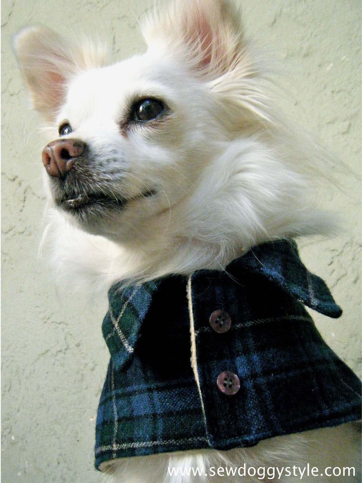Best Of Diy Pet Coat Pattern – Sewing It to Her Dog Sewing Patterns Of Amazing 40 Images Dog Sewing Patterns
