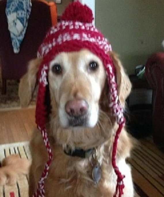 Best Of Dog Earflap Hat Knitting Pattern Knitted Dog Hats Of Innovative 49 Images Knitted Dog Hats
