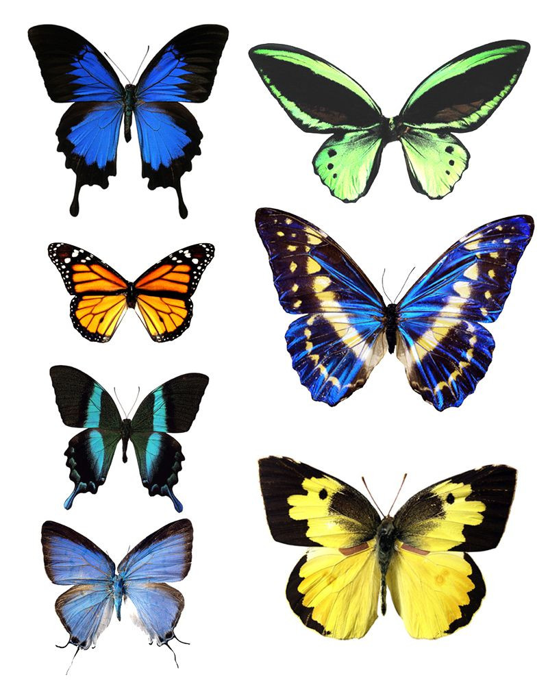 Butterfly Pattern Fresh butterfly Template Printable Of Brilliant 42 Photos butterfly Pattern