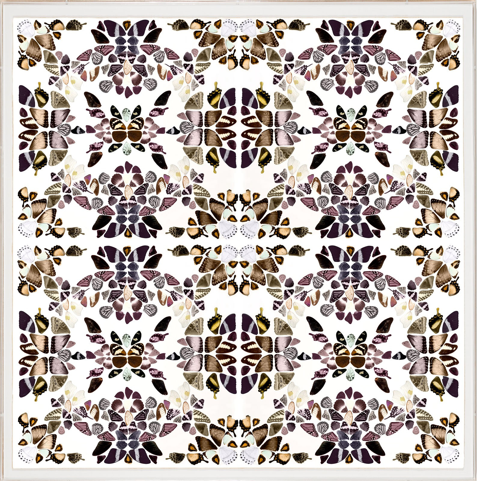 Butterfly Pattern Inspirational butterfly Patterns 2 Of Brilliant 42 Photos butterfly Pattern
