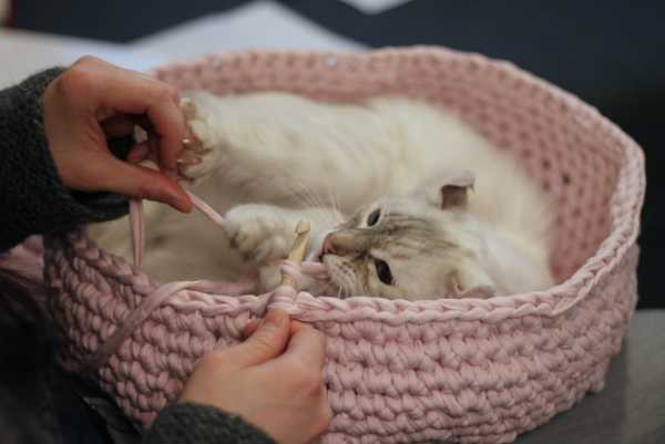 Crochet Cat House Awesome Cute and Cuddle Crochet Cat Cave Of Crochet Cat House