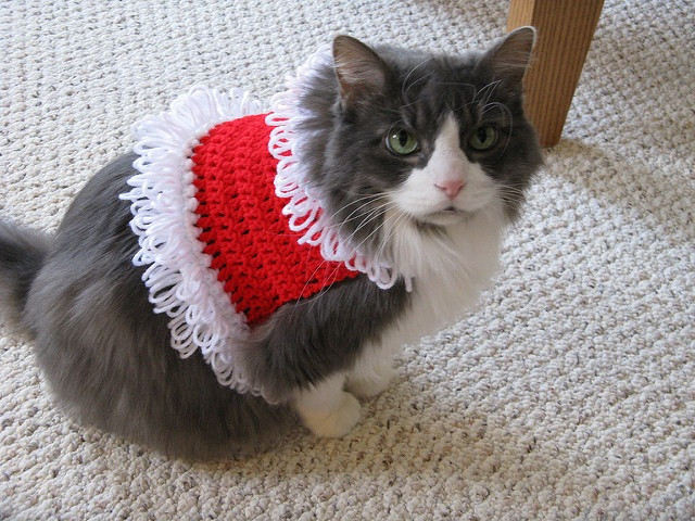 Crochet Cat House Luxury 15 Knitting and Crochet Patterns to Keep Your Pet Warm Of Crochet Cat House
