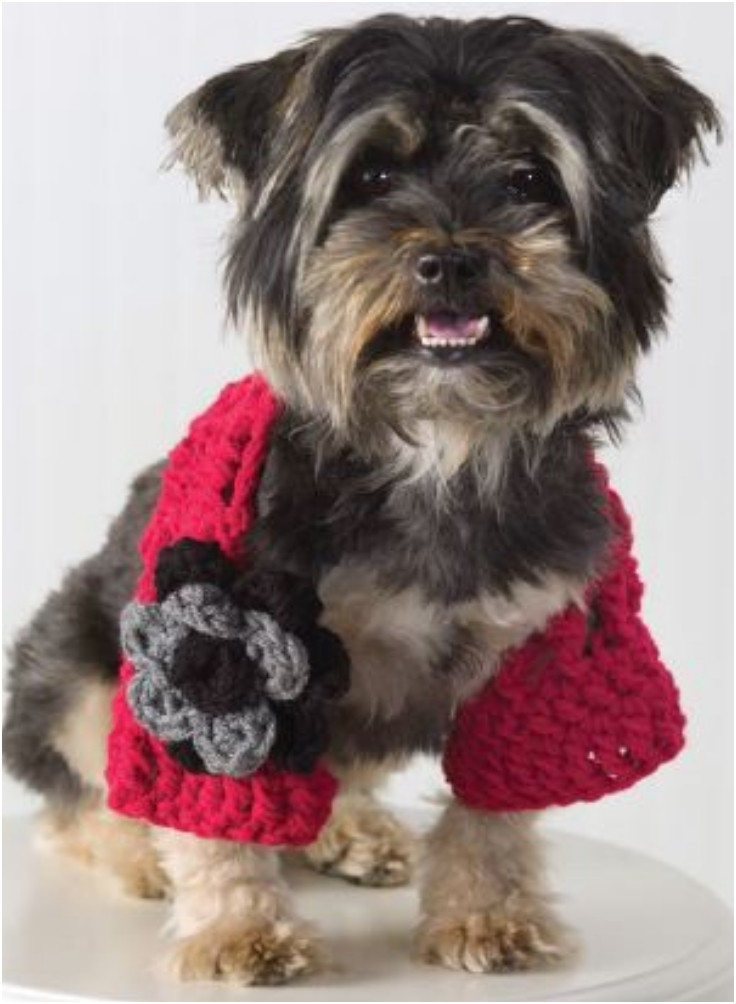 Crochet Dog Best Of Crochet Dog Sweaters Free Crochet Patterns & Video Tutorials Of Perfect 50 Images Crochet Dog