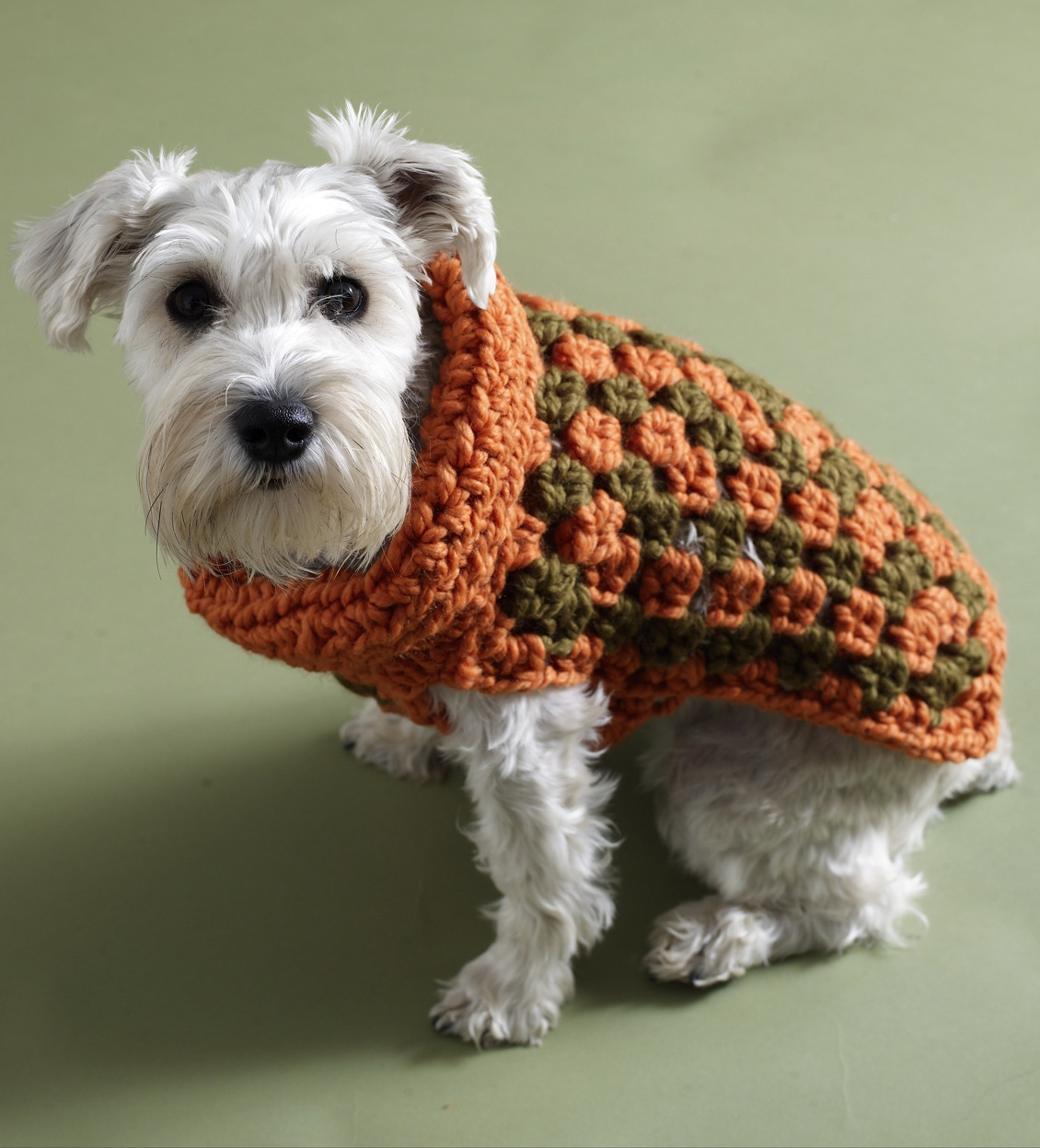 Crochet Dog Coat Pattern Awesome Keep Your Dog Warm with A Crochet Dog Sweater Of Marvelous 41 Photos Crochet Dog Coat Pattern