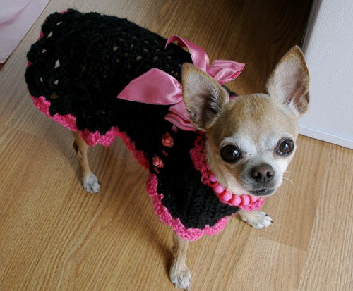 Crochet Dog Coat Pattern Inspirational 21 Dogs In Handmade Dog Sweaters Cute Cuter Cutest Of Marvelous 41 Photos Crochet Dog Coat Pattern