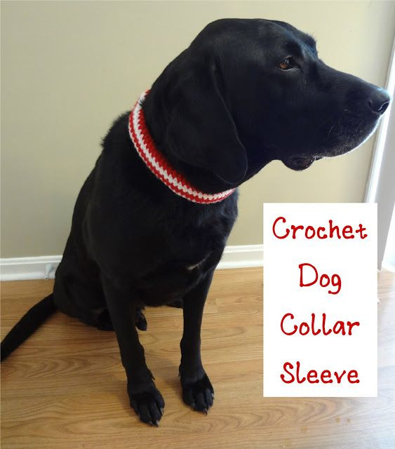 Crochet Dog Collar Luxury 94 Best Images About Crochet Dog Collar On Pinterest Of Gorgeous 50 Ideas Crochet Dog Collar