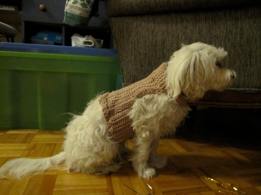 Crochet Dog Elegant Doggie Sweater Of Perfect 50 Images Crochet Dog