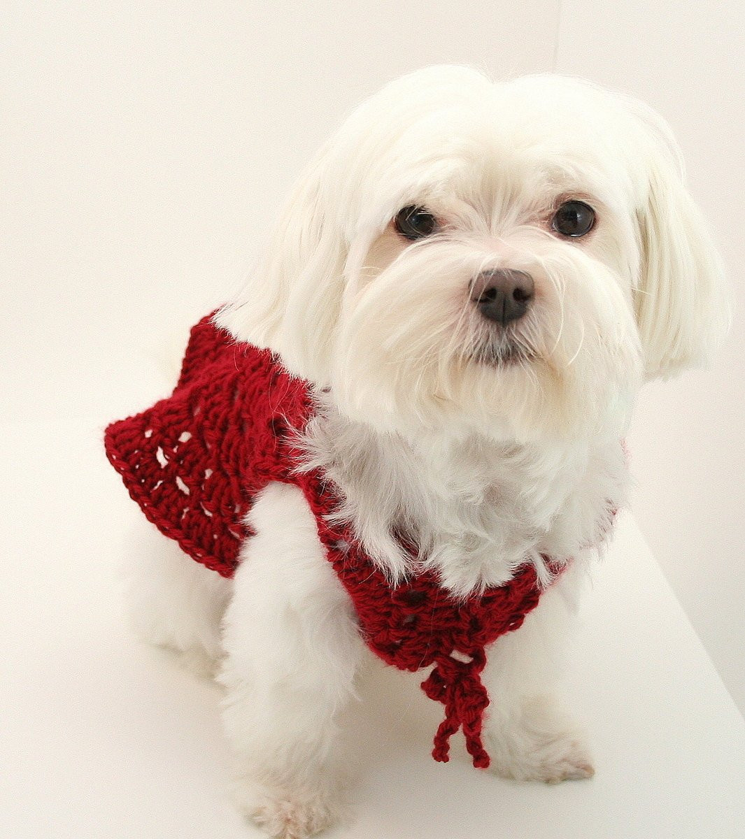 Crochet Dog Lovely Pdf Digital Pattern Crochet Dog Clothes Pattern Dog Of Perfect 50 Images Crochet Dog