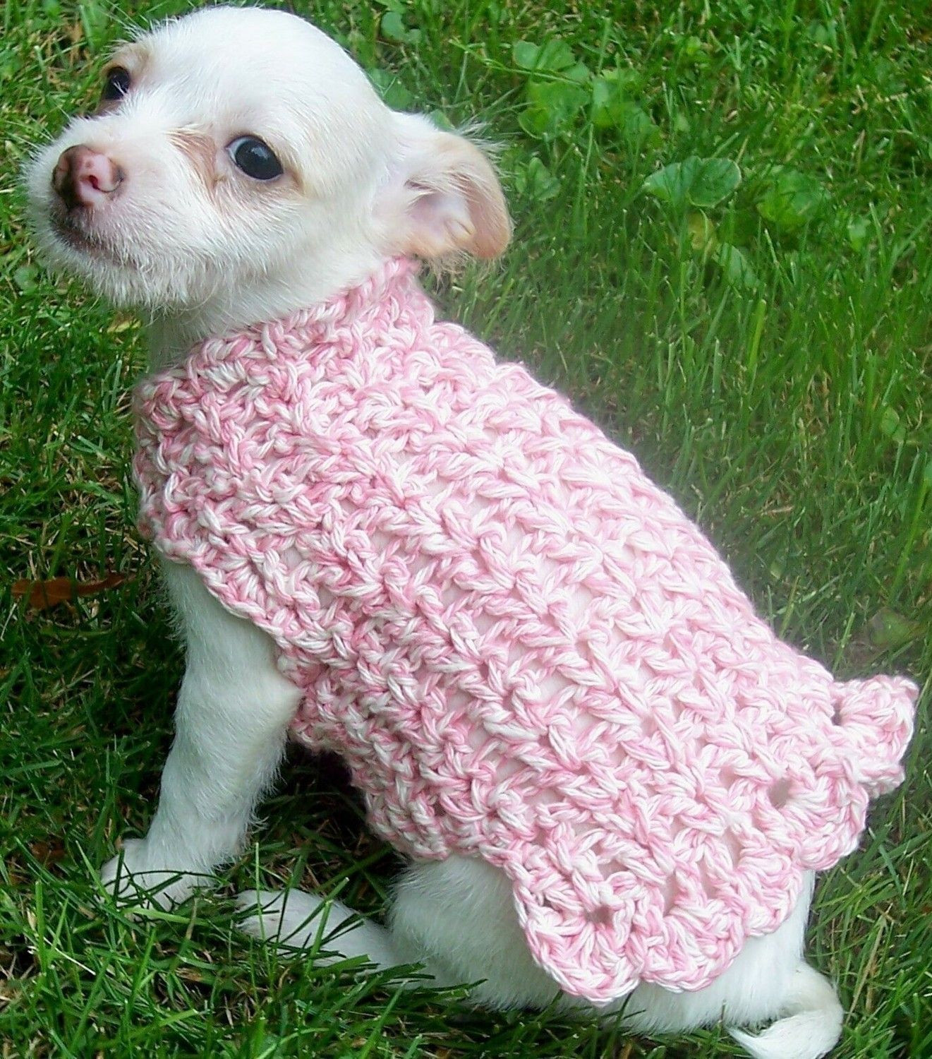 Crochet Dog Luxury Crochet Pattern Adorable Dog Sweater Of Perfect 50 Images Crochet Dog