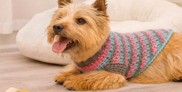 Crochet Dog Sweater Awesome Sporty Style Crochet Dog Sweater [free Crochet Pattern] Of New 46 Photos Crochet Dog Sweater