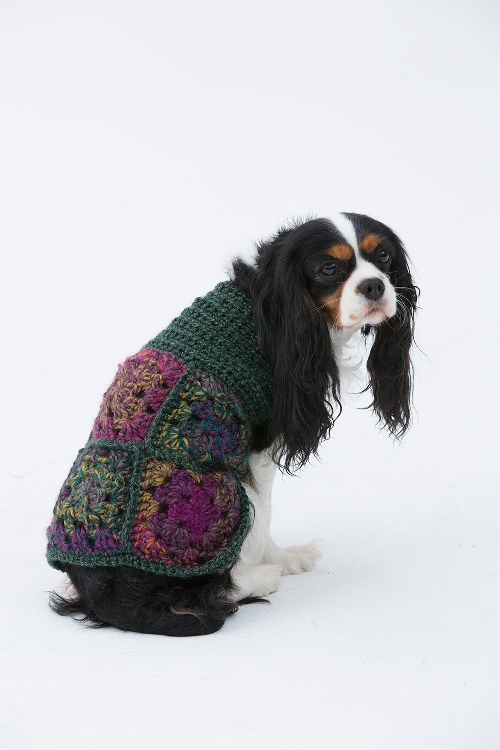 Crochet Dog Sweater Best Of Hippie Dog Sweater In Lion Brand Unique L Of New 46 Photos Crochet Dog Sweater