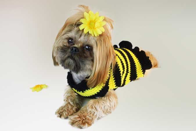 Crochet Dog Sweater Lovely Crochet A Spring Sweater for Your Dog – Free Patterns Of New 46 Photos Crochet Dog Sweater