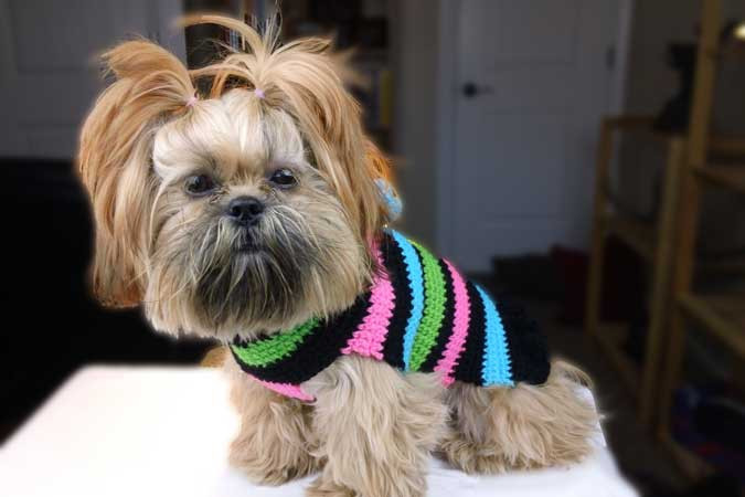 Crochet Dog Sweater with Legs Beautiful 26 Free Crochet Dog Sweater Patterns Of Gorgeous 40 Images Crochet Dog Sweater with Legs