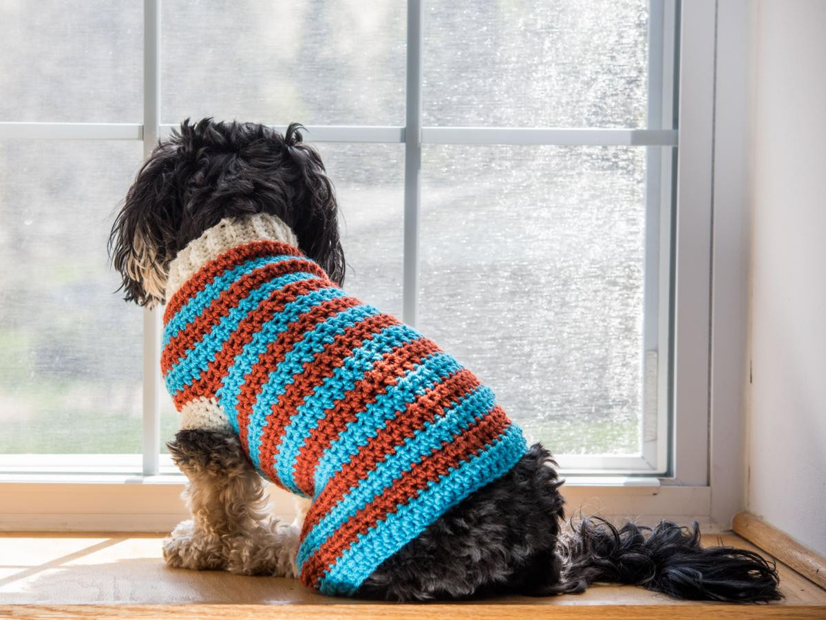 Crochet Dog Sweater with Legs Best Of Lou Lou Dog Sweater Crochet Kit Of Gorgeous 40 Images Crochet Dog Sweater with Legs