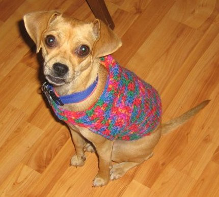 Crochet Dog Sweater with Legs Lovely Crocheted Dog Sweaters Crocheted Clothes for Dogs Of Gorgeous 40 Images Crochet Dog Sweater with Legs