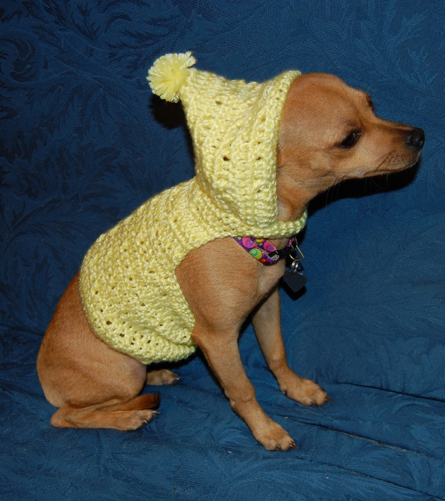Crochet Dog Unique Chihuahua Crochet Pattern – Crochet Patterns Of Perfect 50 Images Crochet Dog