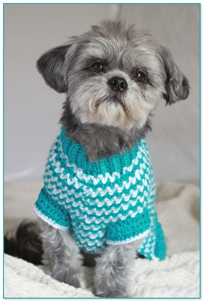 Crochet Small Dog Sweater Inspirational Crochet Wiener Dog Sweater Of Amazing 48 Models Crochet Small Dog Sweater