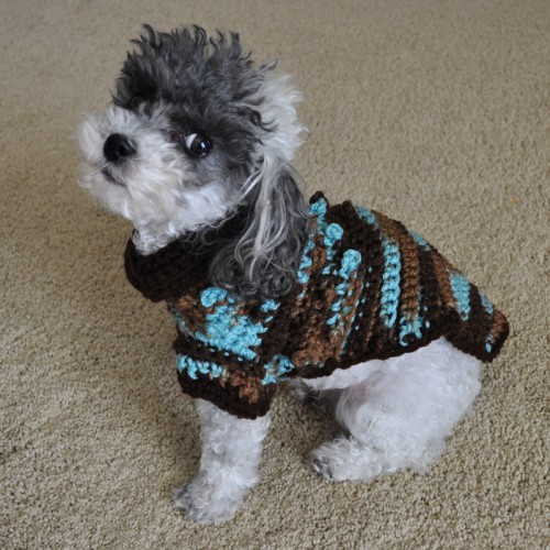 Crochet Small Dog Sweater New Bentley Tiny Bobbles Crochet Small Dog Sweater Of Amazing 48 Models Crochet Small Dog Sweater