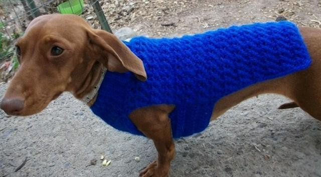 Crochet Small Dog Sweater Pattern Elegant Dachshund & Small Dog Sweater Dog Coat by Copper Llama Of Incredible 47 Images Crochet Small Dog Sweater Pattern