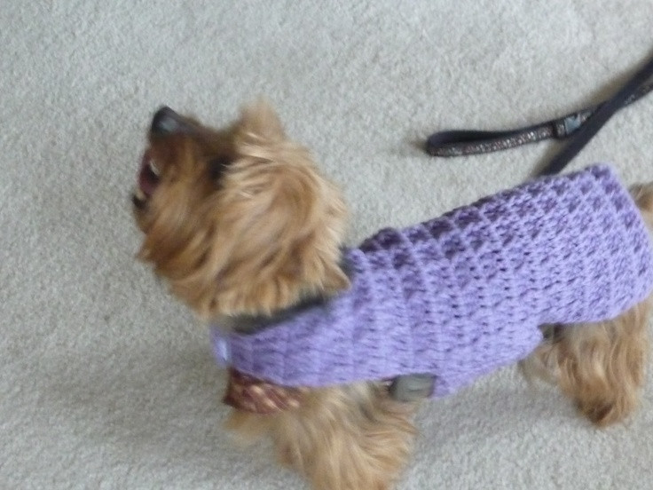 Crochet Small Dog Sweater Pattern Inspirational 17 Best Images About Dog Sweater On Pinterest Of Incredible 47 Images Crochet Small Dog Sweater Pattern