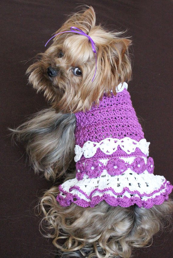 Crochet Small Dog Sweater Pattern Unique Crochet Pattern for Small Dog Sweater Free Patterns for Of Incredible 47 Images Crochet Small Dog Sweater Pattern