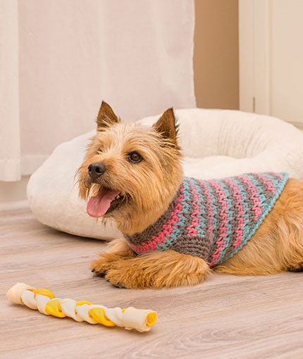 Crochet Small Dog Sweater Pattern Unique top 10 Knit & Crochet Patterns Of 2016 Of Incredible 47 Images Crochet Small Dog Sweater Pattern