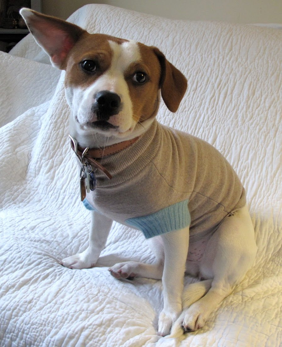 Resweater Tutorial Tuesday easy dog sweater